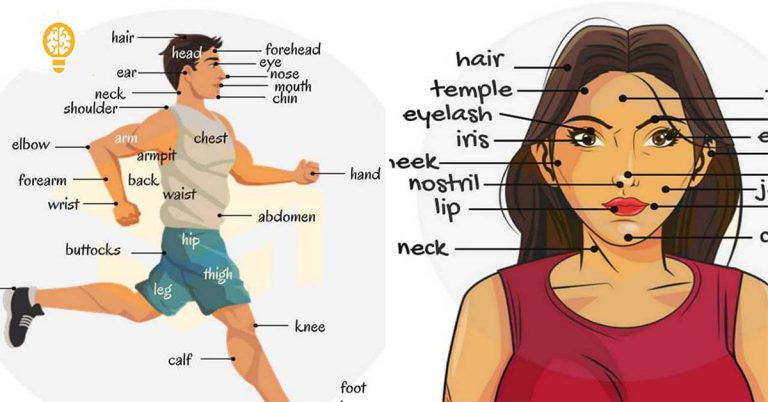 Main Parts of the body in Marathi